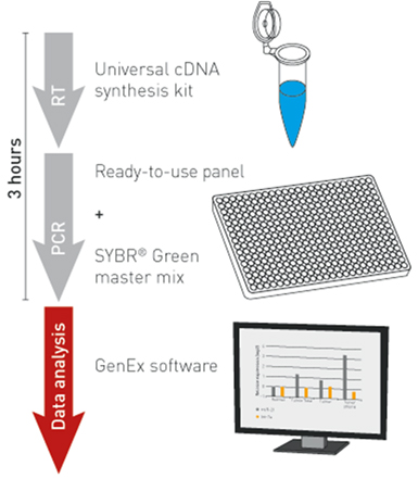Microrna Primer Design Software